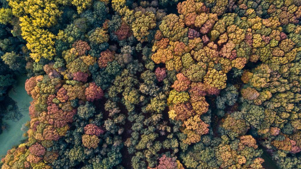 V roce 2018 se v ČR výrazně zvýšil zájem o přírodě blízké lesy s certifikací FSC