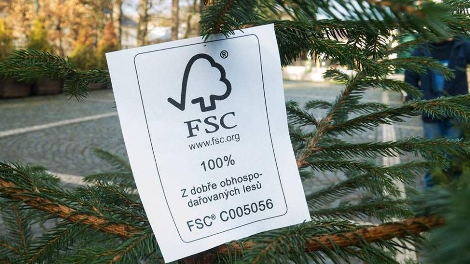 Kde koupit vánoční stromeček z FSC lesa? Letos nejen v okolí Krkonoš a Brna